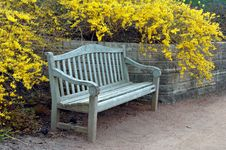 Free Bench With Forsythia Blooming Stock Photo - 5040620