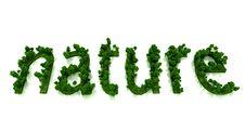 Free Nature Royalty Free Stock Photos - 5040748