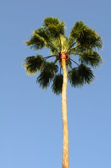 Free Palm Tree Royalty Free Stock Photography - 5040977