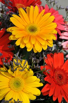 Free Colorful Daisies Royalty Free Stock Images - 5041059