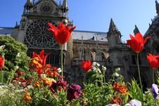 Free Notre Dame Stock Photos - 5041313