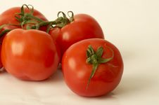 Free Tomatoes Stock Images - 5044054
