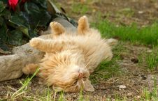 Free Cat Play Royalty Free Stock Photography - 5044477