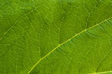 Free Leaf Close Up Stock Image - 5044941