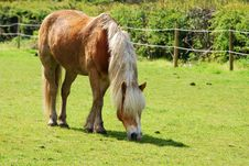 Free Grazing Horse Stock Image - 5046311