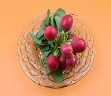 Free Radish On The Plant Royalty Free Stock Images - 5047199