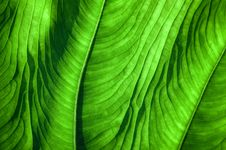 Free Tropical Leaf Stock Images - 5047674