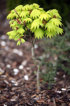 Free Freshly Green Tree Stock Photos - 5047793