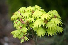 Free Freshly Green Tree Stock Photography - 5047832