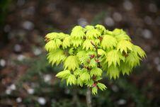 Free Freshly Green Tree Stock Photography - 5047872