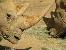 Free Rhinos Heads Royalty Free Stock Photography - 5048227