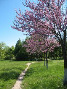 Free Timber Path Stock Image - 5048361