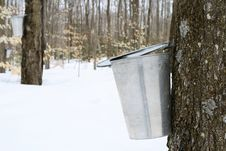 Free Droplet Of Maple Sap Falling Into A Pail Royalty Free Stock Photos - 5048378