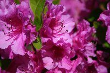 Free Purple Passion Stock Image - 5048651