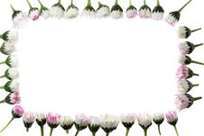 Free Daisy Frame Royalty Free Stock Images - 5049269