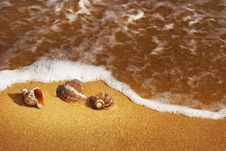 Free Seashell Stock Photos - 5049723