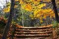 Free Autumn Park. Stock Photos - 50410273