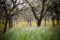 Free Spring Orchard Stock Photo - 5055440