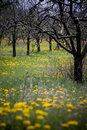 Free Orchard Royalty Free Stock Photos - 5056028