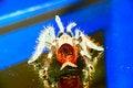 Free Tarantula Spider Ready To St Royalty Free Stock Photos - 5058228