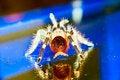 Free Tarantula Spider Ready To St Stock Image - 5058241