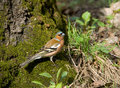 Free Forest Bird Stock Photography - 5059342