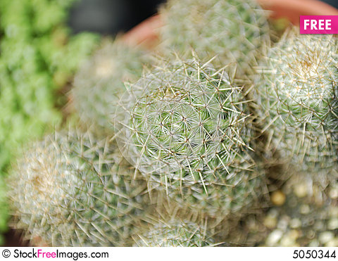 Free Green Cactus Stock Images - 5050344