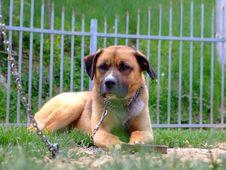 Free Dog Stock Photo - 5050140