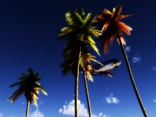 Free Plane And Wild Palms Royalty Free Stock Image - 5050496