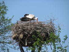 Free Stork Stock Image - 5050511