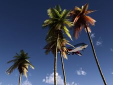 Free Plane And Wild Palms 2 Royalty Free Stock Images - 5050549
