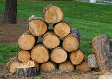 Free Fresh Cut Wood Royalty Free Stock Images - 5050969