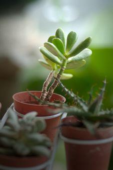 Free Plant Royalty Free Stock Photos - 5051318