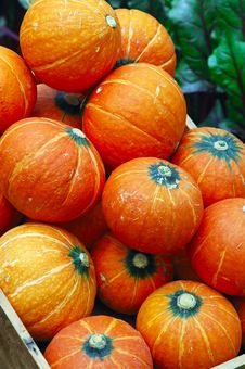 Free Pumpkins In Garden Stock Photos - 5051763