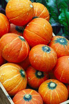 Free Pumpkins In Garden Stock Photos - 5051763