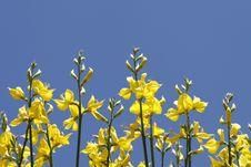 Free Flowers 2 Stock Image - 5052361