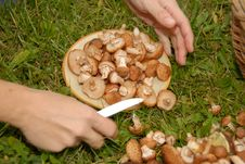 Free Mushrooms On The Plate Royalty Free Stock Image - 5052726