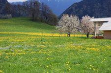 Free Spring Stock Image - 5053301