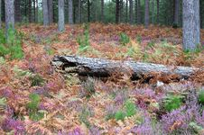 Free Log Laying In The Heather Stock Image - 5053551