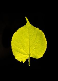 Free Macro Green Leaf Royalty Free Stock Photos - 5054108