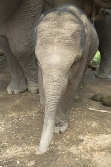 Free Baby Elephant Stock Photos - 5054253