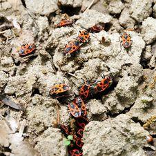 Free Bugs Stock Image - 5054891