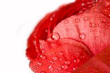 Free Macro Of Fresh Flower Royalty Free Stock Photos - 5055748