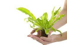 Small Plant Stock Photos