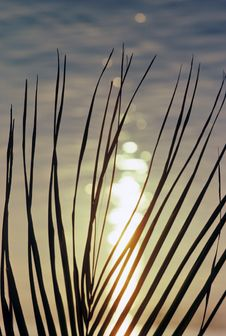 Free Sunset Fronds Stock Image - 5057051