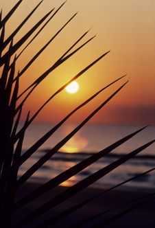 Free Sunset Fronds Stock Images - 5057054