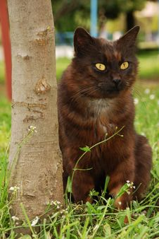 Free Cat On Grass Royalty Free Stock Photos - 5057378