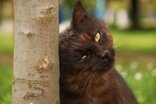 Free Cat On Grass Stock Photography - 5057382