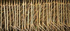 Free Bamboo Pattern Royalty Free Stock Image - 5057386