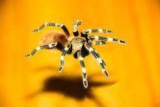 Tarantula Spider On Glass An Royalty Free Stock Photography